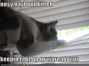 funny-pictures-nosy-neighbor-kitten-is-spying-on-you2