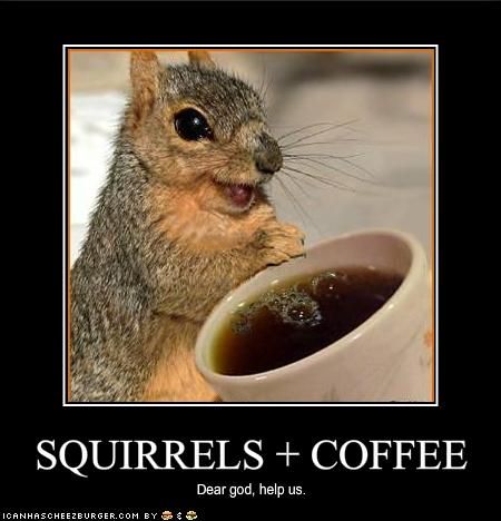 funny-pictures-squirrels-have-discovered-coffee.jpg